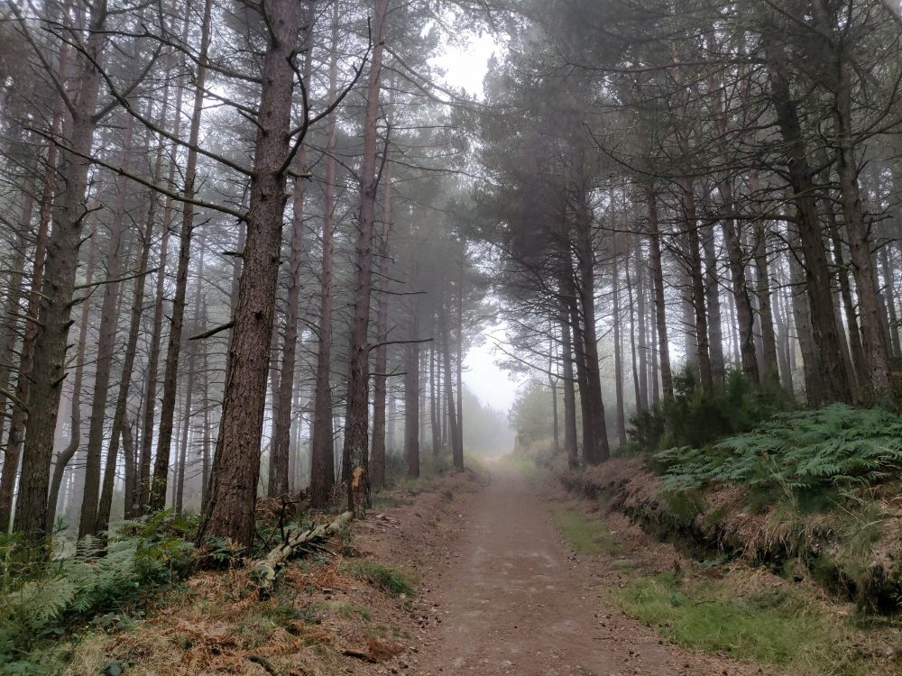Through the trees on the Primitivo