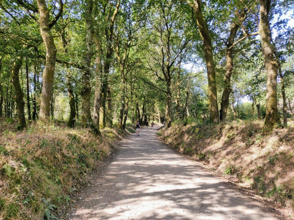 Walking through the woods, Camino Primitivo