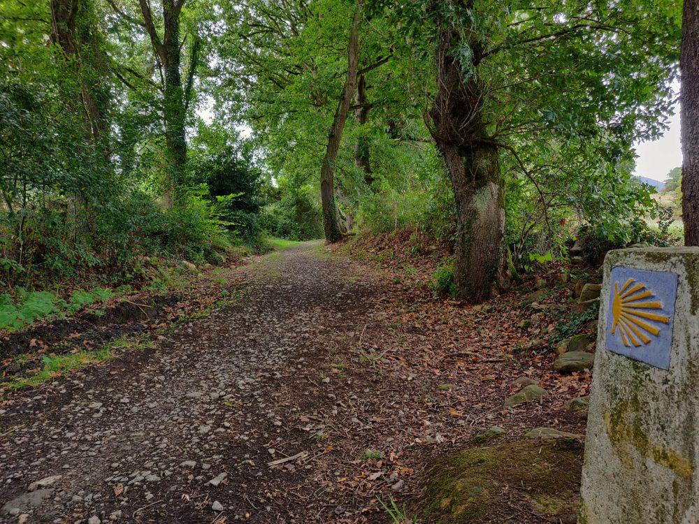 Woodland trail, day 3, Camino Primitivo